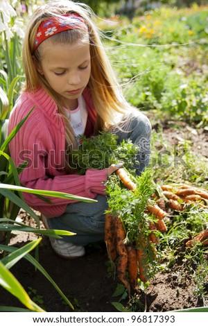 Girl in vegetable garden hold carrots - stock photo