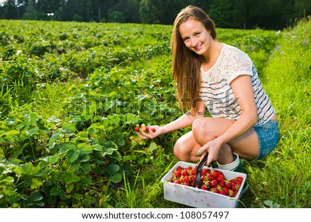 Girl inspect strawberries on field and she pick ripe ones to the basket, girl look toward camera - stock photo