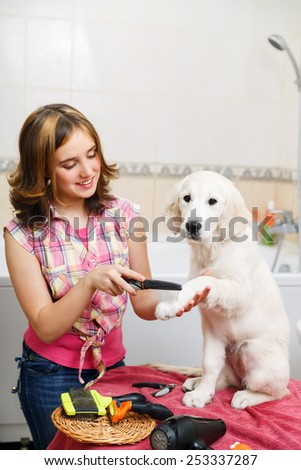 Girl owner is combing out the fur of retriever puppy after shower - stock photo