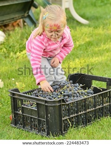 girl picked grapes in the winery - stock photo