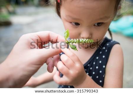 Girl smell the fragrance of shiso flower - stock photo