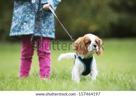 Girl Taking King Charles Puppy For Walk On Lead - stock photo