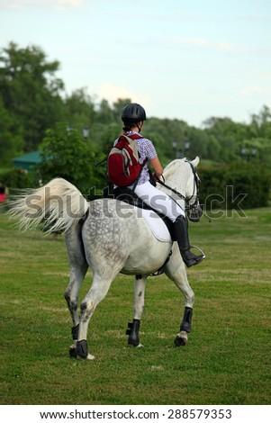 Girl with arabian stallion walking in a meadow  - stock photo