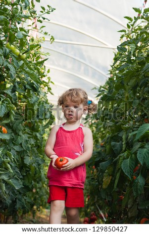 girls picked tomatoes in greenhouse - stock photo