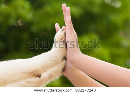Give me five -Puppy pressing his paw against a Girl hand on nature background - stock photo