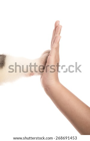 Give me five -Puppy pressing his paw against a Girl hand on white background isolated - stock photo