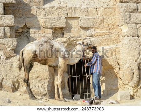 GIZA, EGYPT - NOV 23, 2014: Unidentified Egyptian man rides with camel at Giza Necropolis, Egypt. UNESCO World Heritage - stock photo
