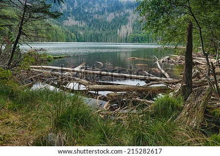 Glacial Devil`s Lake surrounded by the forest in South Bohemia - stock photo