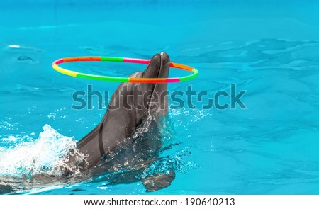 Glad beautiful dolphin in blue water in the swimming pool on a bright sunny day twist Gymnastic circle on his nose on the representation - stock photo