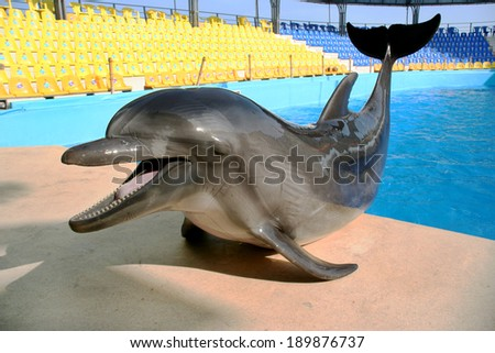Glad beautiful dolphin smiles and waits for fish meal on the rim of the pool on a bright sunny day  - stock photo