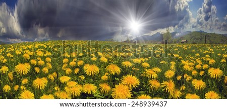 Glade Spring  summer flowers-dandelions under a clear sky with bright clean clouds pleases viewer saturated colors and the freshness of a new day. After  storm and rain especially bright foliage color - stock photo