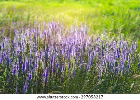glade with flowers - stock photo