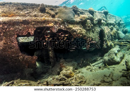 Glass eyed sweepers inside the sunken tug boat - stock photo