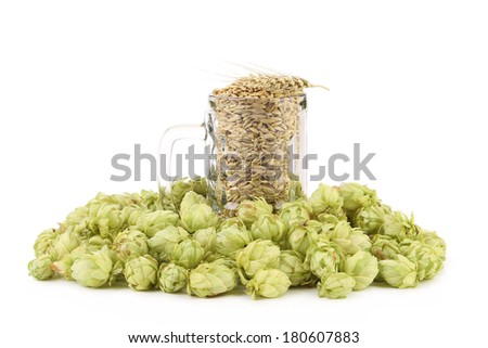 Glass full of barley and hops. Isolated on a white background. - stock photo