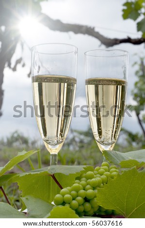 glass of champagne in the vineyard - stock photo