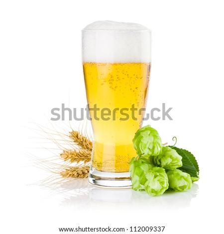Glass of fresh beer with Green hops and ears of barley isolated on a white background - stock photo