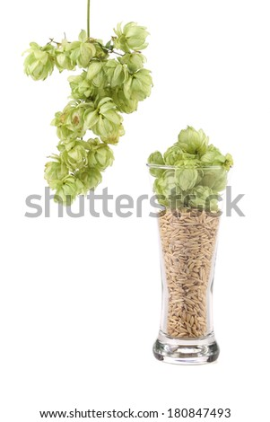 Glass of fresh green hops and barley. Isolated on a white background. - stock photo