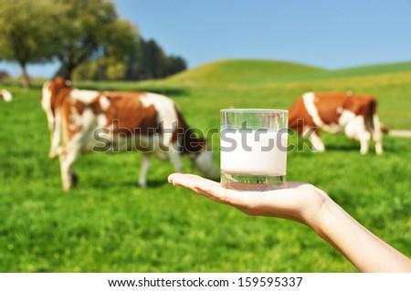 Glass of milk against herd of cows. Emmental region, Switzerland - stock photo