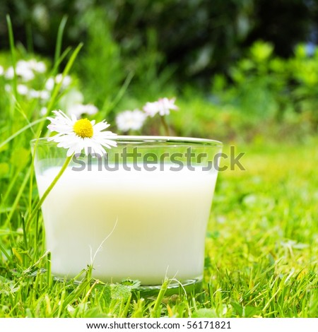 glass of milk on green grass and flower showing food concept - stock photo