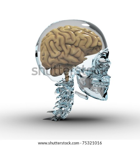 Glass skull with brain. - stock photo