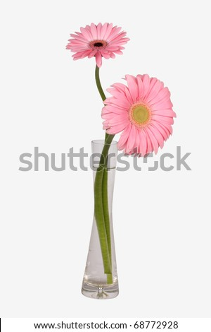 Glass vase with pink daisy flowers - stock photo