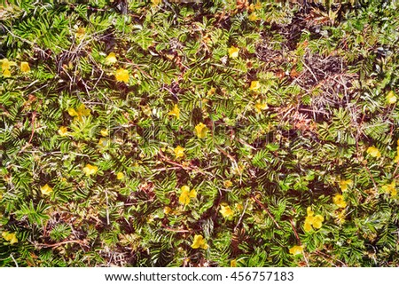 glass with yellow flower background from the ground - stock photo
