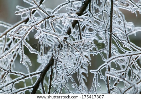 Glazed Tree Branch After Winter Ice Storm, Snow and Frozen Rain, Icicles - stock photo