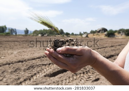 Glean is growing up in rich soil on hands - stock photo