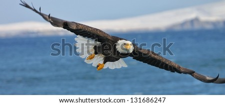 Gliding - stock photo