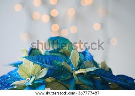 Glittery Christmas poinsettia in blue and white with lights in background - stock photo
