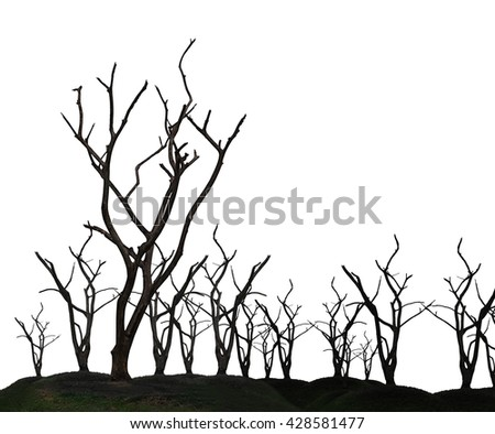 Global warming concept. Dark and burned of dead tree isolated on white background. Wildfires concept. Silhouette of dead tree. - stock photo