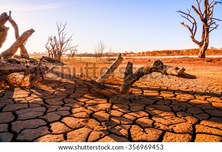 Global warming concept. dead tree under hot sunset,  drought cracked desert landscape - stock photo