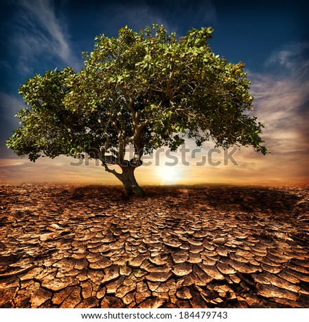 Global warming concept. Lonely green tree under dramatic evening sunset sky at drought cracked desert landscape - stock photo