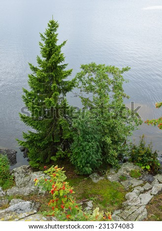 Gloomy day. The trees on shore lake - stock photo