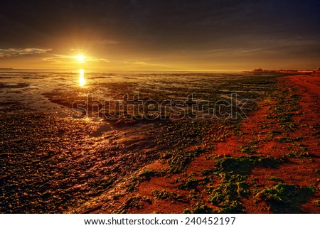 Glorious sunrise over shore sprinkled with seaweed - stock photo