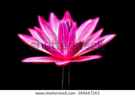 Glow image of Pink Lotus flower - stock photo