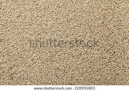 glutinous black foxtail millet - stock photo
