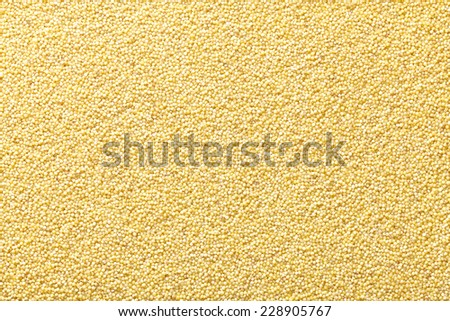 glutinous yellow foxtail millet - stock photo
