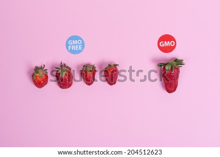 GMO and GMO free strawberries on pink background. Separated in categories with circle signs. High angle view. Closeup studio shot. - stock photo