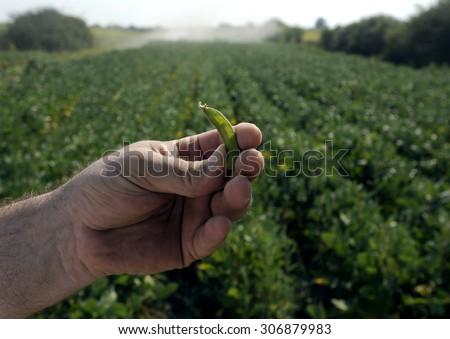 GMO soyfield - stock photo