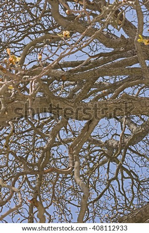 Gnarled Tree Viewed From Bottom Abstract Closeup - stock photo