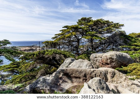 Gnarly, twisted, crooked, Cypress trees at the Allan Memorial Grove forest at Point Lobos State Marine Reserve, surrounded by, unusual geological rock formations & aquamarine waters & blue skies. - stock photo