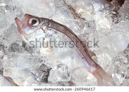gnome fish - stock photo