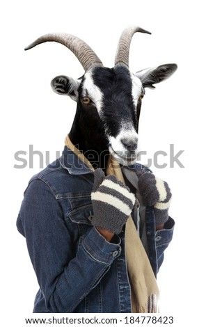 Goat dressed in jacket and gloves concept with human body - stock photo