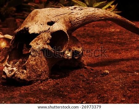Goat Skull in rustic setting - stock photo
