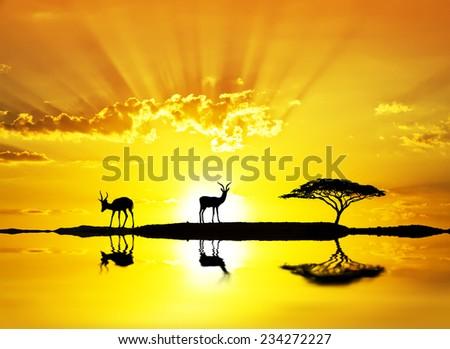 goats enjoying the sunset - stock photo