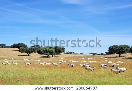 goats grazing in the field at Portugal - stock photo