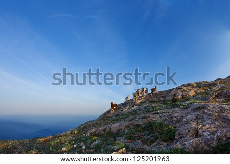 Goats grazing on a hillside on against the blue sky - stock photo