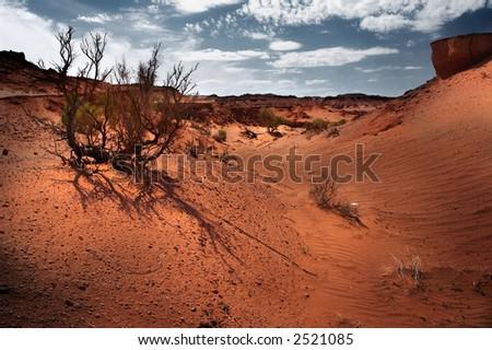 Gobi Desert parched plants - stock photo