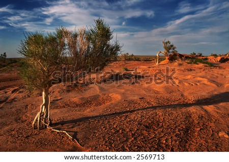 Gobi tree - stock photo